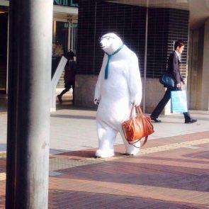 Business Bear