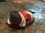 Christmas Seal
