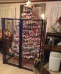 Well Guarded Christmas Tree