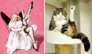 19 Cats Doing Sexy Poses