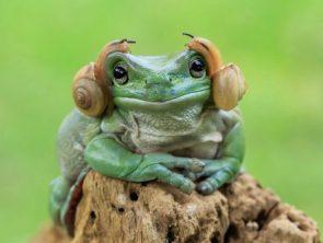 Princess Leia Frog