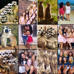 girls are meercats