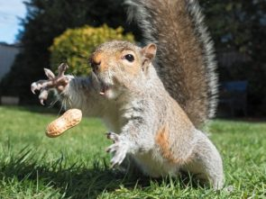 squirrel grabbing at a nut