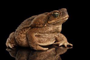 toad profile