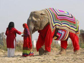 well dressed elephant