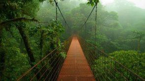 Suspension bridge over a rain forest