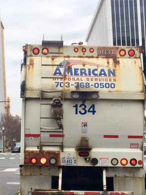 american disposal raccoon