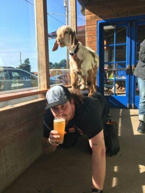 Beer Goat