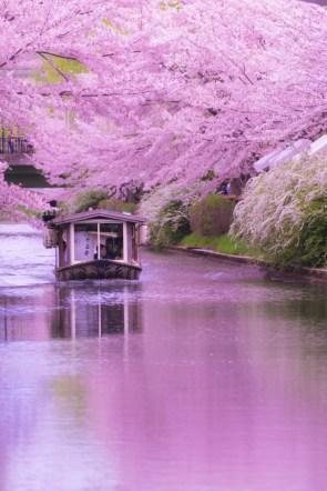 Cherry Tree River.jpg