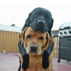 Doggy Buddies