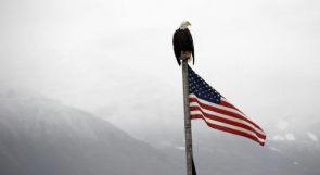 Eagle on an American Flag