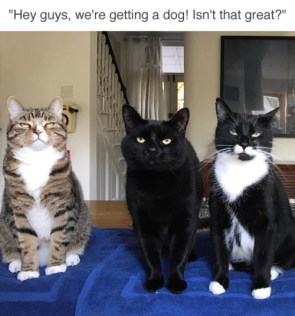 excited cats.jpg