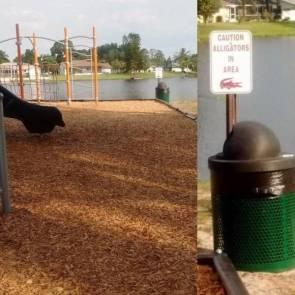 Caution- Alligators in Area