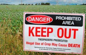 Danger Keep Out of Poppy Field