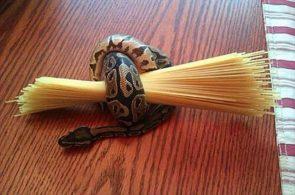 Noodle Holder