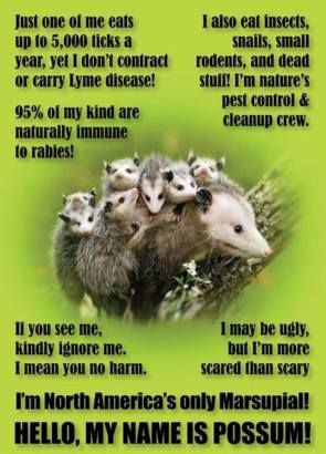 Possum Facts