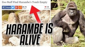 harambe is ALIVE