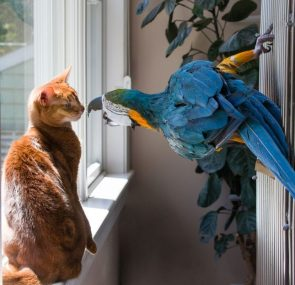 I welcome our new parrot overlords First they start with the cats…