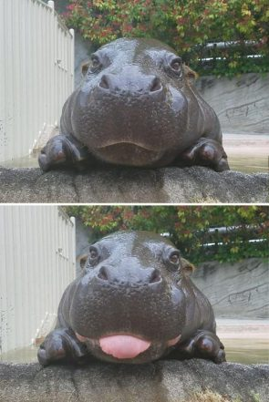 Bleppy Hippo