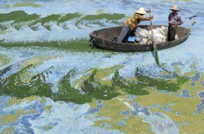 Fishermen row a boat in the algae-filled Chaohu Lake in Hefei, Anhui 6-19-2009