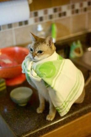 Green Apple Hero Cat