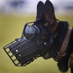 Uparmored K9 Unit