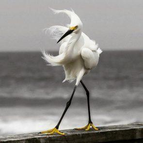 Windy Bird