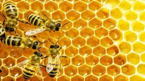 bee honey comb