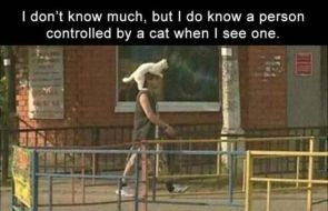 cat controlled