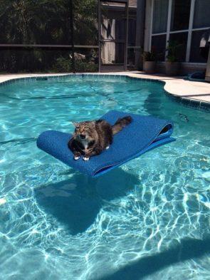 happy pool cat