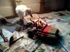 jurassic toys