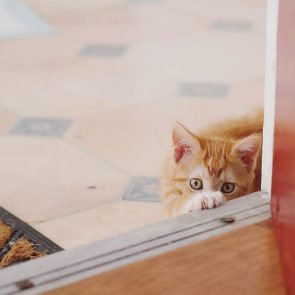 vicious killer cat