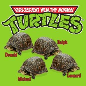 Adolescent Healthy Normal Turtles.jpg