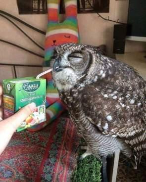 Juicy Owl