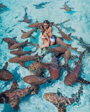 Shark Orgy