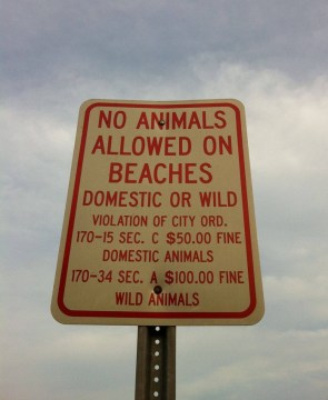 no animals allowed on beaches