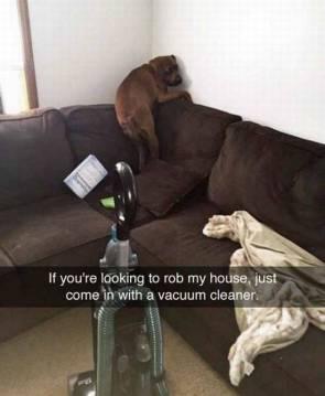 rob my house
