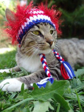 American Indian Kitty