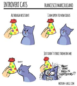 Introvert Cats
