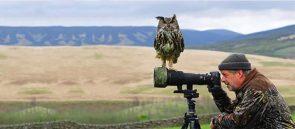 Owl Photographer
