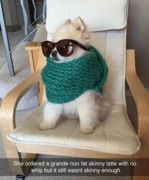 Preppy Dog