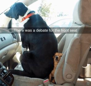 debate dogs