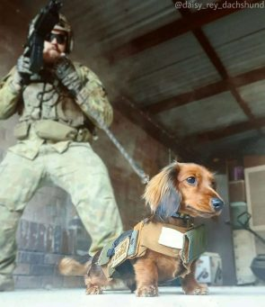 Military Small Dog