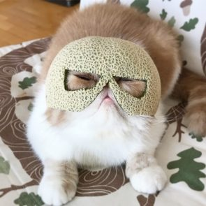 Mysteriously Masked Cat