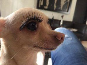 Pretty dog eyes