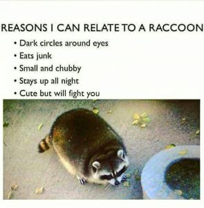 Coonatable