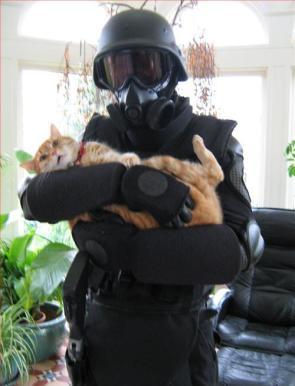Swat Cat