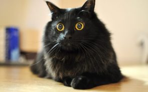 Wide Eyed Cat