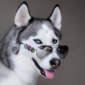 Aviator Dog