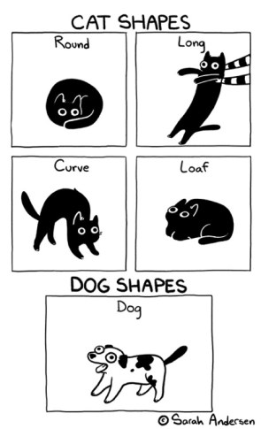 Cat Shapes